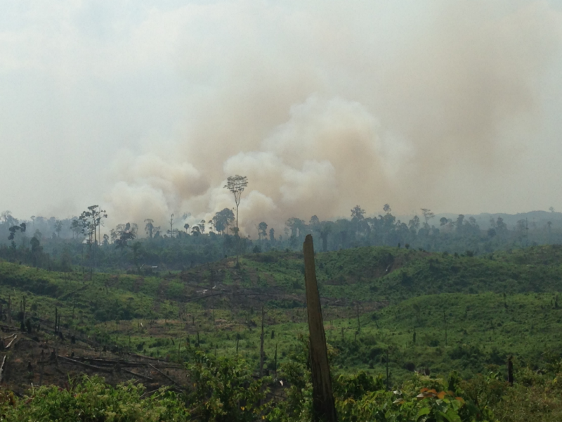 landscape showing deforestation