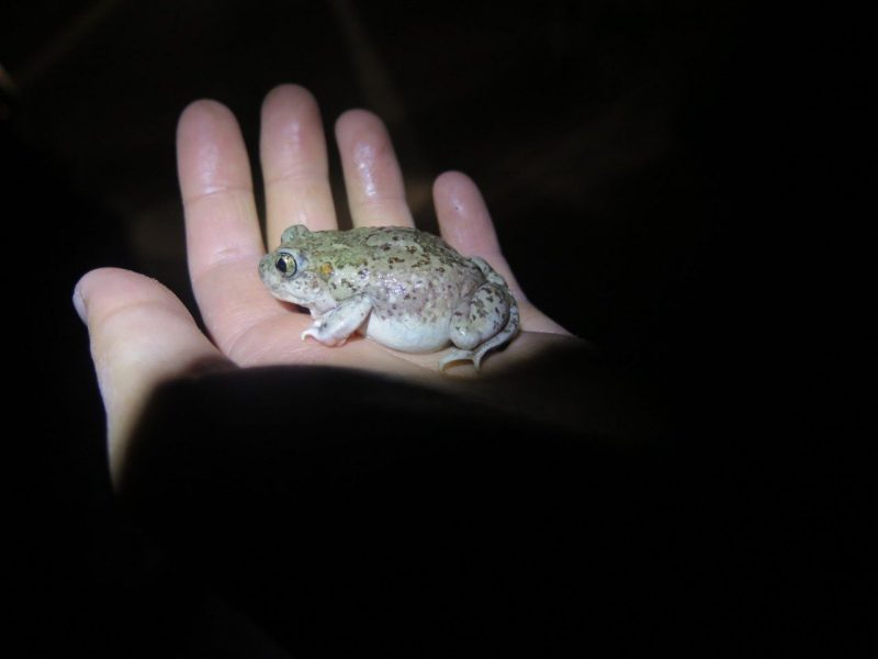 frog in a hand (is worth two in the bush ;)